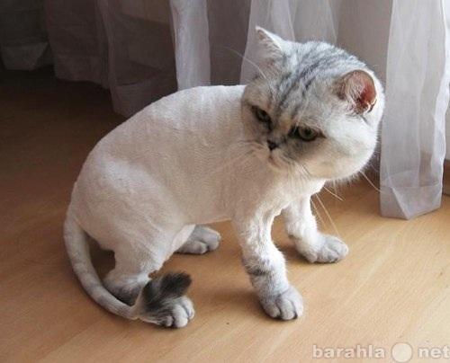 Предложение: Стрижка кошек с выездом на дом.