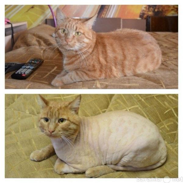Предложение: Стрижка кошек и собак в Самаре и области