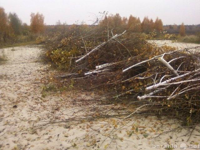 Предложение: Спил,распил деревьев