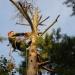 Предложение: Спил деревьев