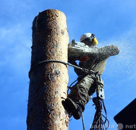 Предложение: Спил деревьев в Орехово-Зуевском районе