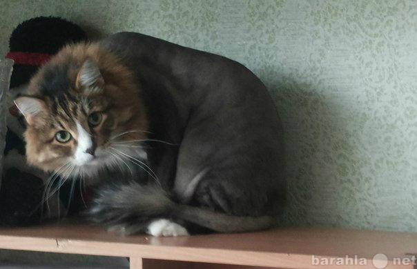 Доска объявлений тольятти стрижка кошек работа в пушкине свежие вакансии 2014 водитель