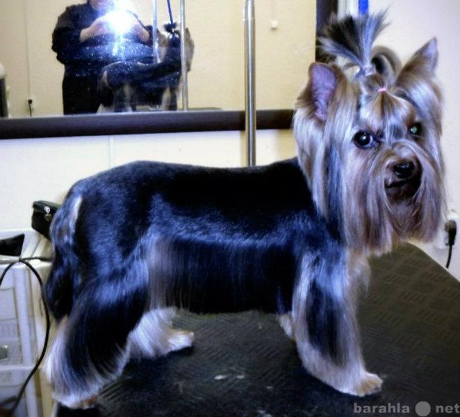 Предложение: Качественная стрижка собак и кошек