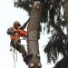 Предложение: Спилить или обрезать дерево