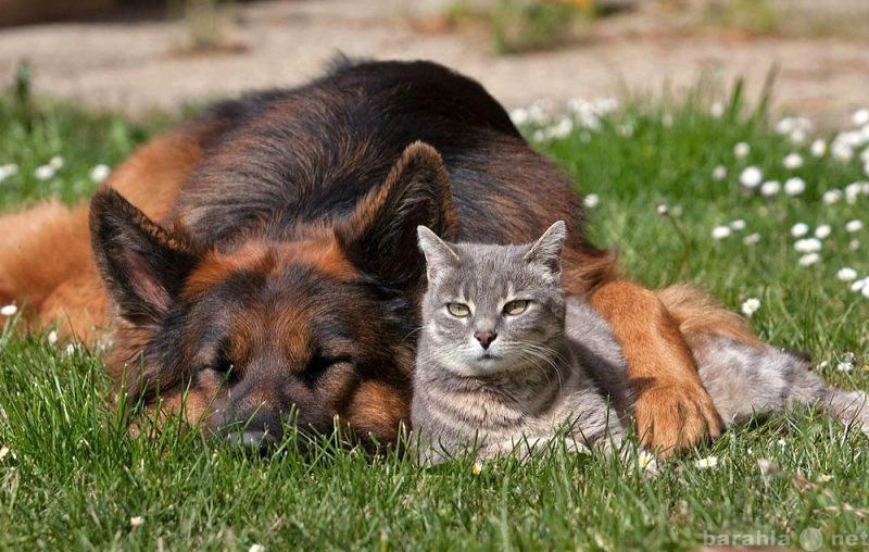Предложение: Зоогостиница для собак и кошек