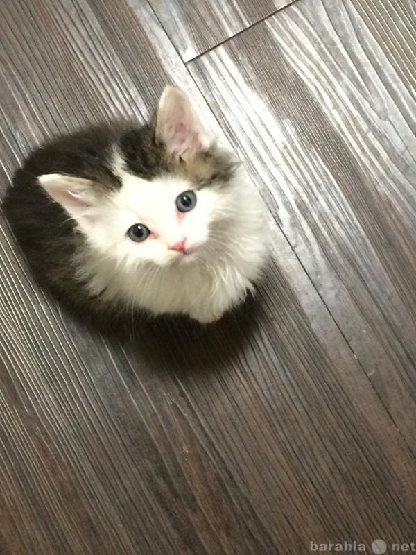 Предложение: Отдадим котят!