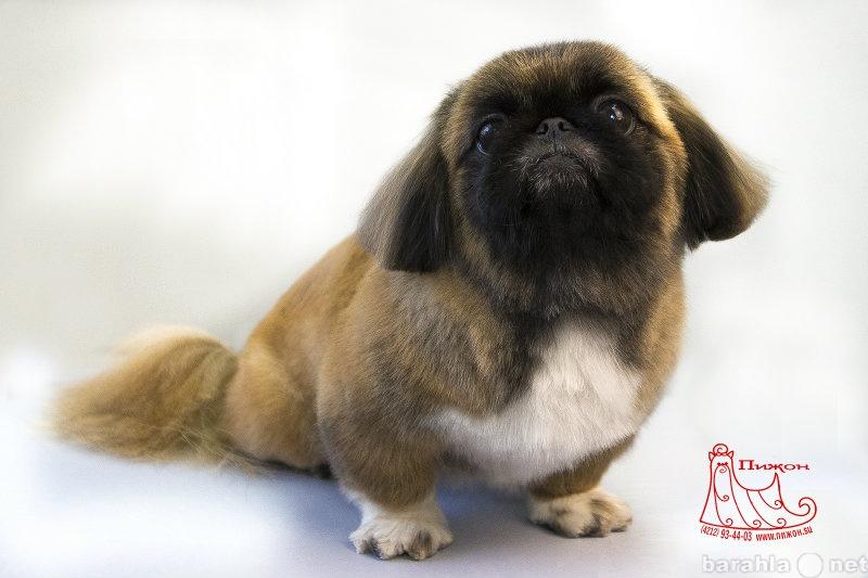 Предложение: Стрижка собак Хабаровск