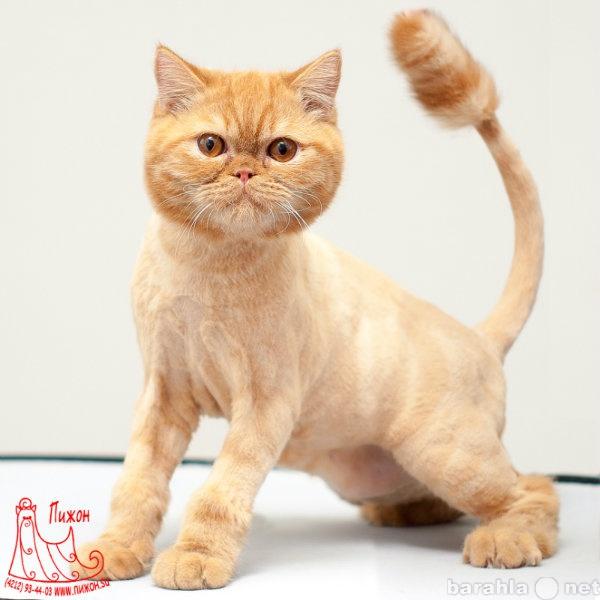 Предложение: Стрижка кошек в Хабаровске