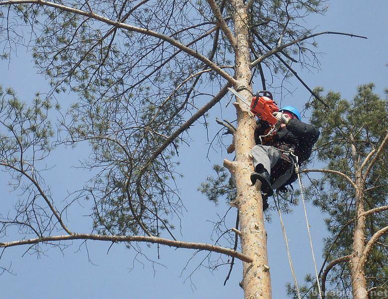 Предложение: Вырубка леса, распил деревьев