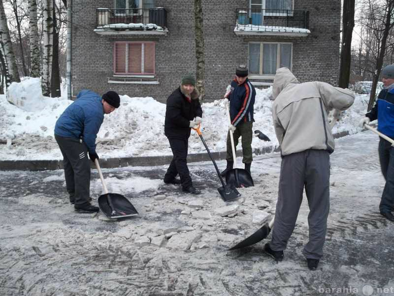 Предложение: Выносим,вывозим и убираем мусор,снег!