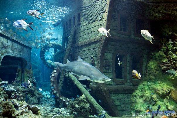 Предложение: Поездки в самый крупный океанариум