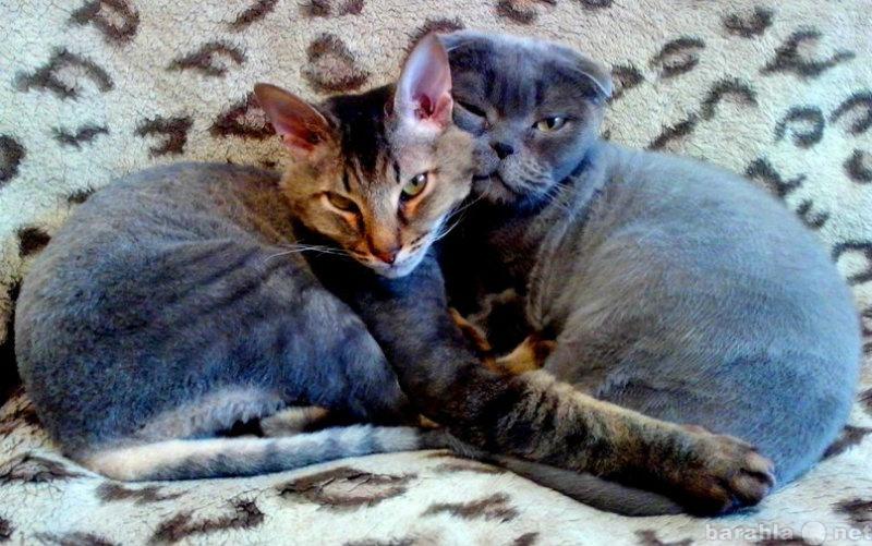 Предложение: Стрижка кошек и собак  с выездом