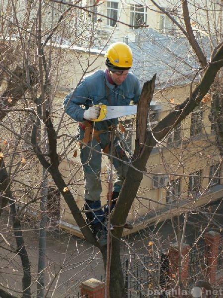 Предложение: Спил деревьев. Обрезка веток. Вывоз