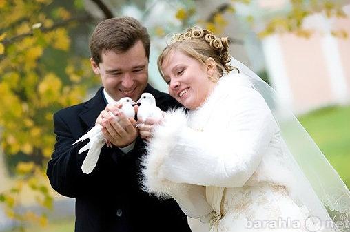 Предложение: Выпуск свадебных белых голубей у ЗАГСа