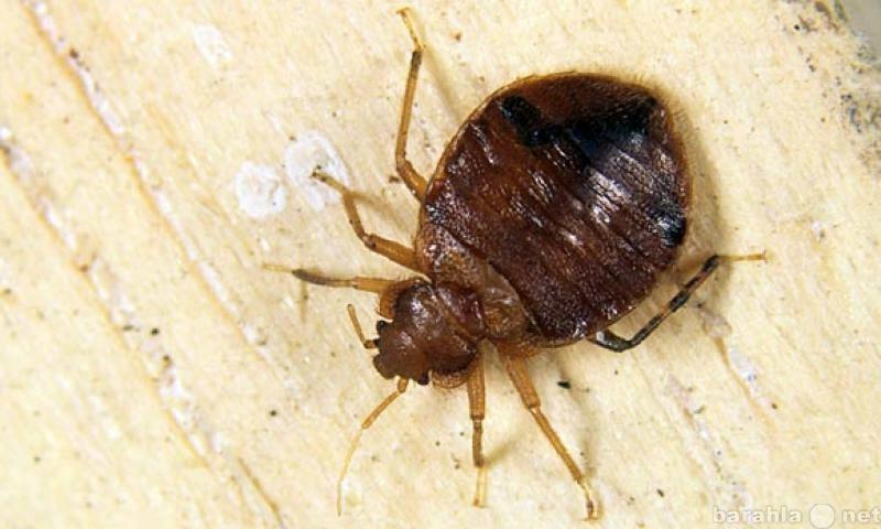 Предложение: Травим насекомых в квартирах