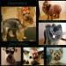Предложение: Стрижка собак и кошек Груминг