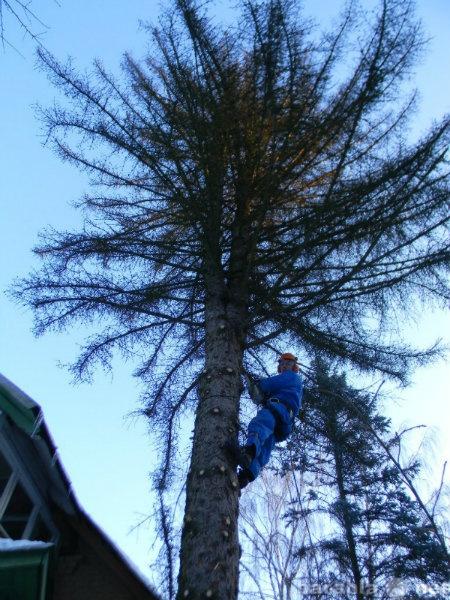 Предложение: Спилить дерево в Орехово-Зуево