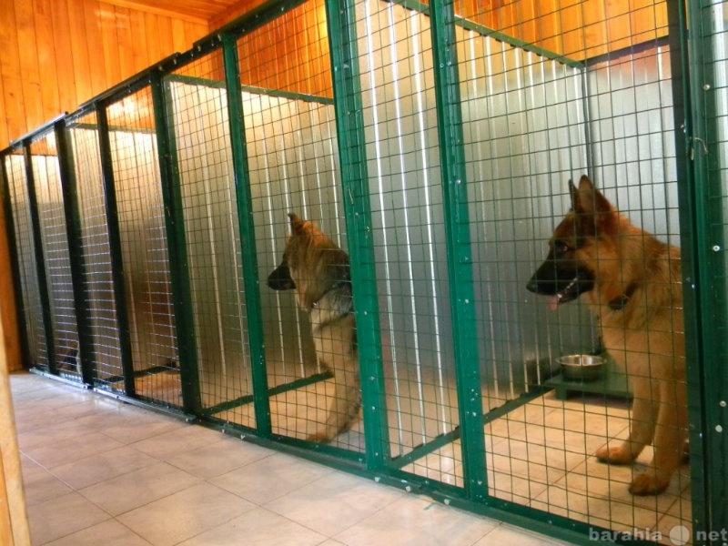 Предложение: Профессиональная гостиница для собак