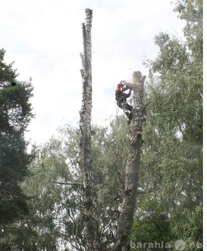 Предложение: В Дмитрове спилить дерево
