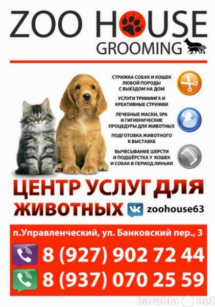 Предложение: Стрижка собак и кошек