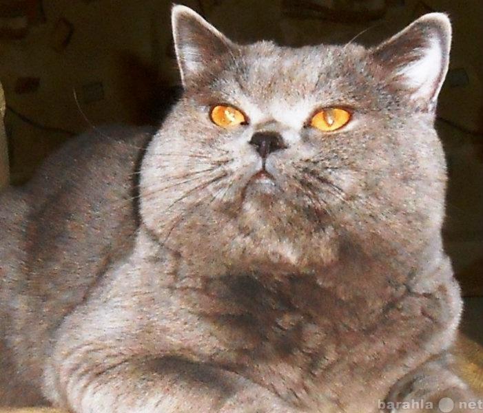 Оренбург вязка котов