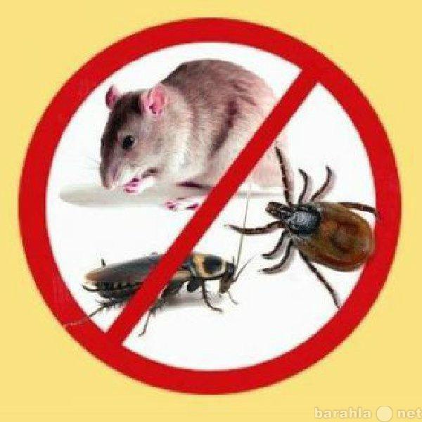 Предложение: уничтожение грызунов и насекомых