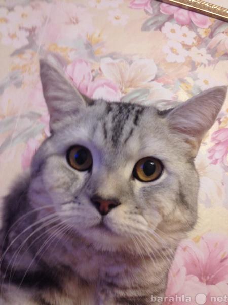Предложение: Кот на вязку