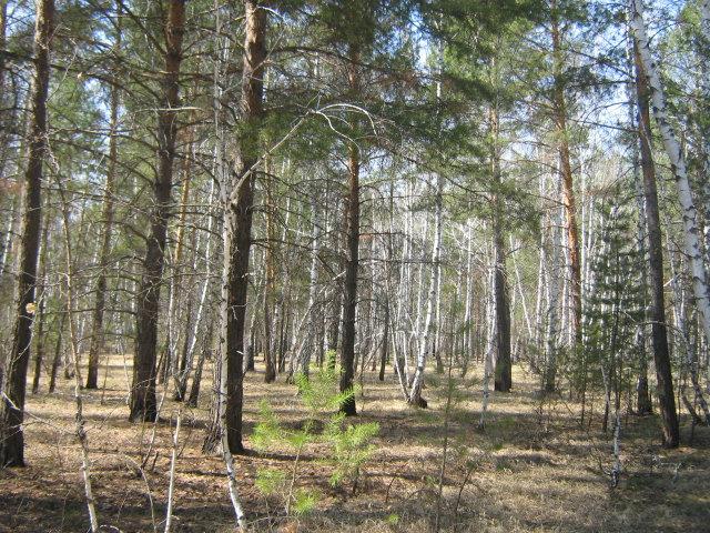 Продам: участок 119 соток в поселке Чернолучье