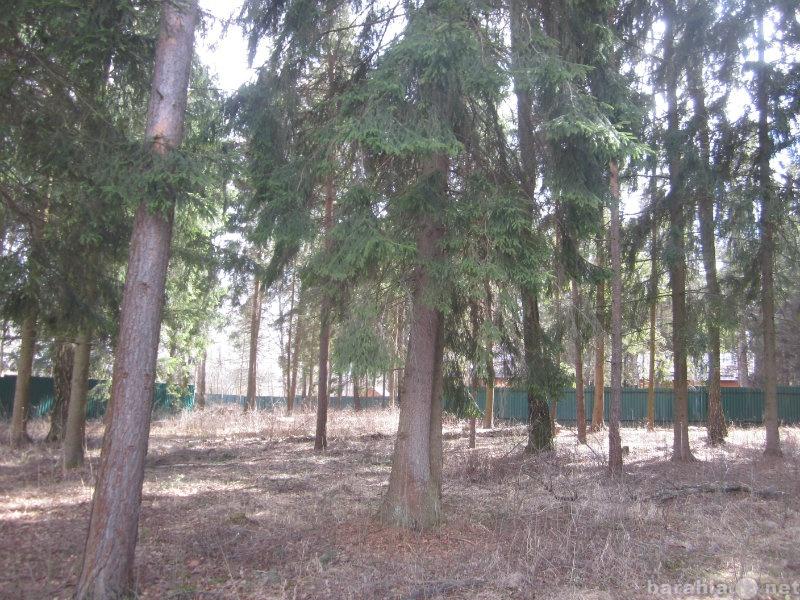 Продам: Красивый лесной участок в д. Еськино